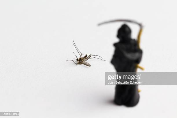 death and mosquito - brown recluse spider stock pictures, royalty-free photos & images