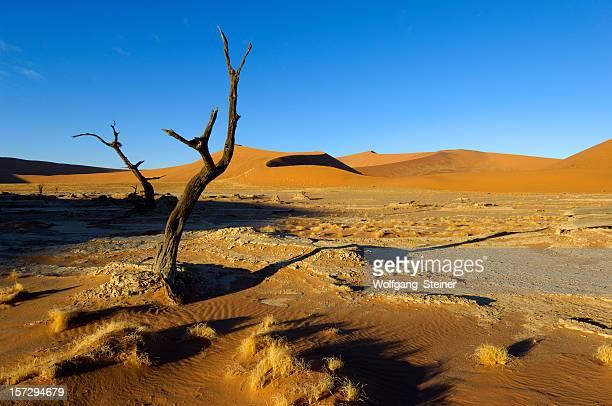 árvores de morte no dead vlei - animal de safari imagens e fotografias de stock