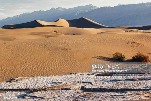 death valley, mesquite flat sand dunes at sunrise. california, usa - francesco riccardo iacomino united states foto e immagini stock
