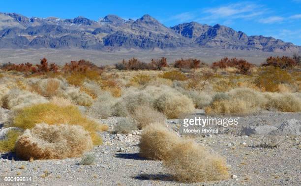 Death Valley National Park Winter