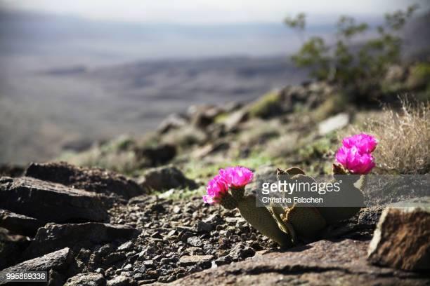 death valley - christina felschen - fotografias e filmes do acervo