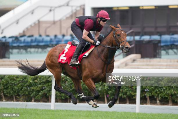 Deauville training on the track to prepare for the LONGINES Hong Kong International Races at Sha Tin racecourse on December 7 2017 in Hong Kong Hong...