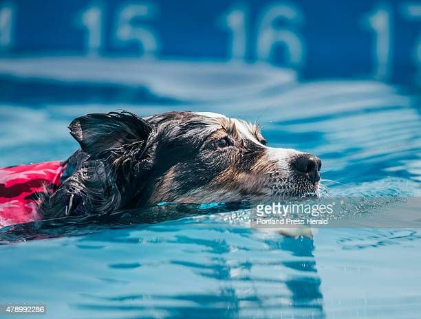 Debbie King's dog Attitash swims toward her toy after jumping into the water during the Dock Dogs competition in Scarborough ME on Saturday June 27...