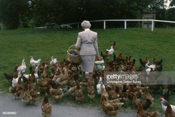 Deborah Cavendish, nee Mitford, the Duchess of Devonshire, feeds the chickens at Chatsworth House, Derbyshire, 1990s.