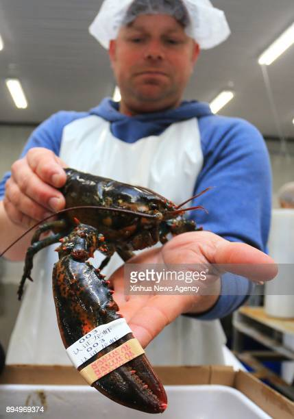 A worker shows a live lobster with an official quality program rubber band in Chinese at a workshop of Nautical Seafoods Ltd in Annapolis Royal Nova...