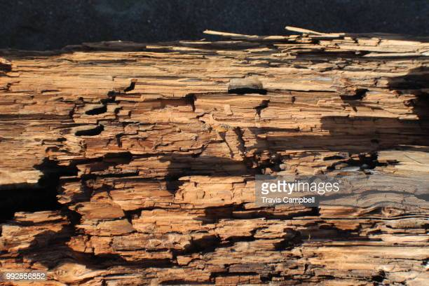 decayed wood - rotting stock pictures, royalty-free photos & images