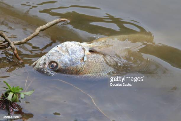 decaying fish on the shore - death stock pictures, royalty-free photos & images