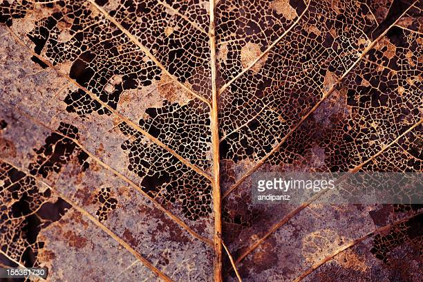 decaying leaf - rot stock pictures, royalty-free photos & images