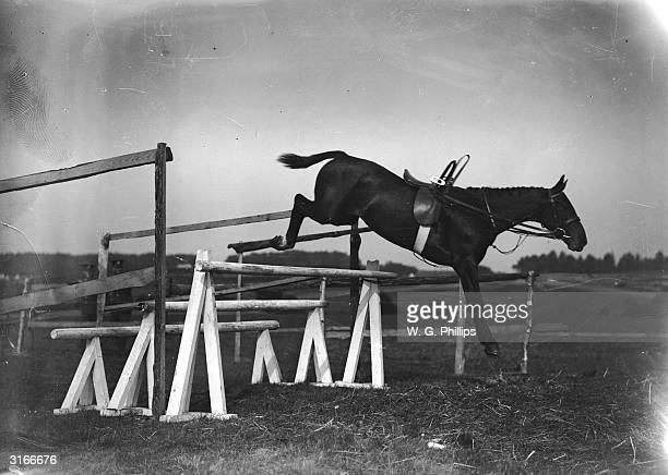 Riderless horse takes a fence at Newmarket.