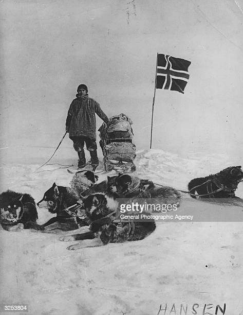 A member of Amundsen's Antarctic expedition believed to be his assistant Hansen with a sledge and team of huskies beside the Norwegian flag at the...
