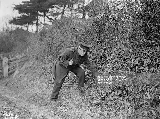 Septuagenarian government ratcatcher Thomas Wellman looking for rats in an overgrown bank He is armed only with a walking stick