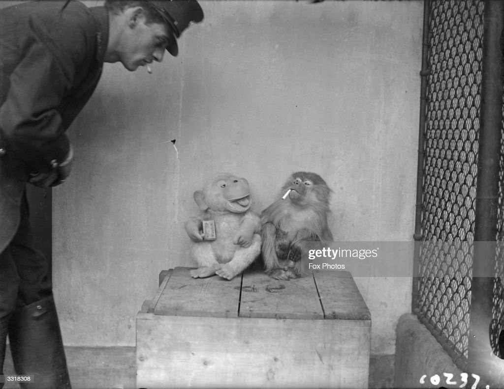 Zookeeper John Wilkie has a cigarette break with a caged monkey and its stuffed companion.