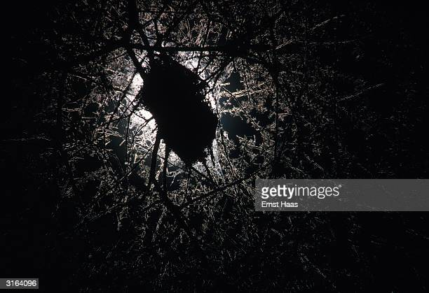 Moonlight shining behind a bird's nest in a tree in Africa