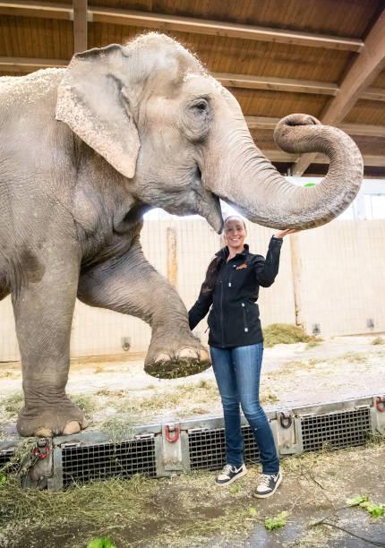 DEU: Circus Krone Brings Elephants To Munich