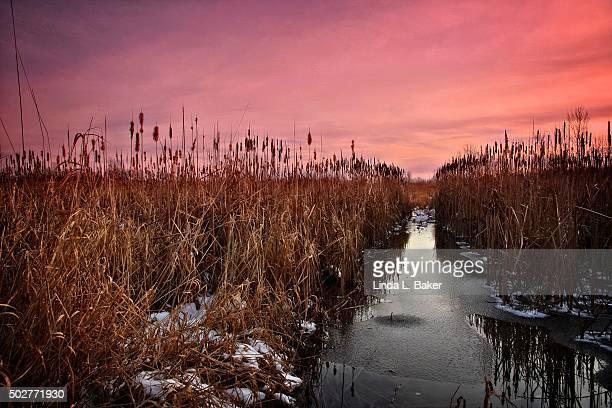 December at the Marsh
