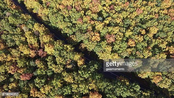 Deciduous Autumn Forest