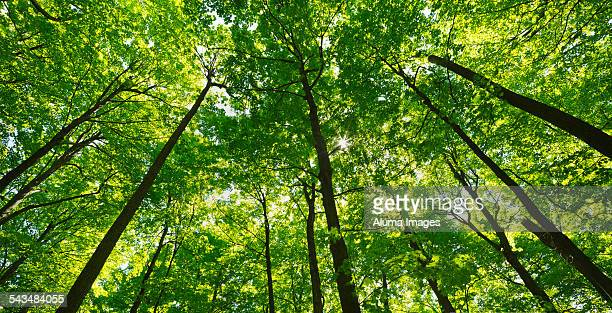 Deciduous forest canopy