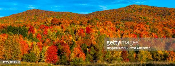 deciduous forest in bright autumn colours, bromont, province of quebec, canada - eastern townships stock pictures, royalty-free photos & images
