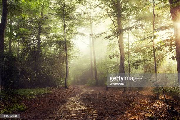 deciduous forest in spring against the sun - wald stock-fotos und bilder
