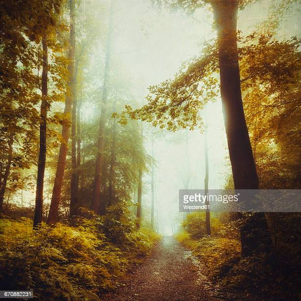 Deciduous forest in spring, forest path