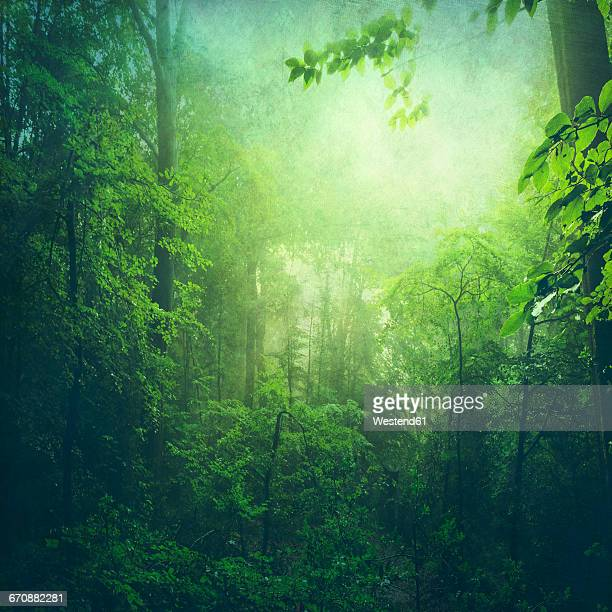 Deciduous forest in summer, early-morning haze