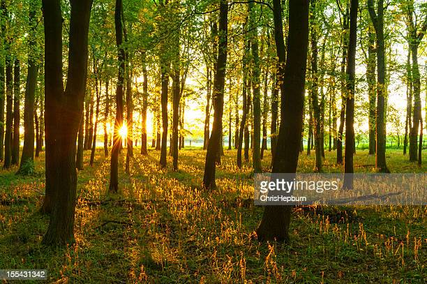 deciduous forest - hertfordshire stock pictures, royalty-free photos & images