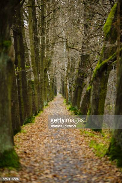 Deciduous trees stand in an alley in the Spreewald on November 18 2017 in Lehde Germany