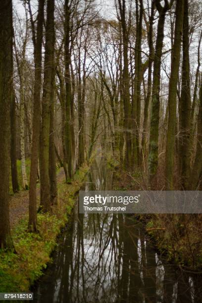 Deciduous trees stand on a canal of the Spree in the biosphere reserve Spreewald on November 20 2017 in Luebbenau Germany