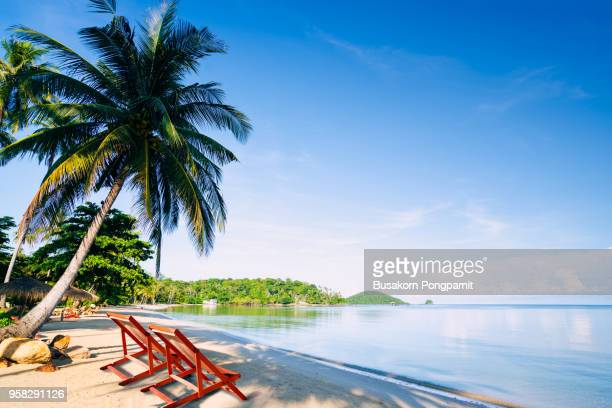 deck chair on the tropical beach with coconut palm trees - samoa stock pictures, royalty-free photos & images