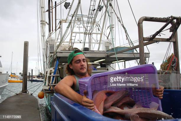 Deckhand Chris helps unload coral trout from Avolon fishing boat at Arabon Seafoods for export on April 24 2019 in Bowen Australia Bowen population...