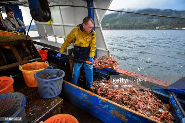 Deckhand on the Guide Me prawn trawler Angus Brown lands a prawn catch from Loch Long on March 5 2019 in Greenock Scotland Scotland's live seafood...