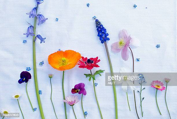 Deconstructed posy of spring flowers