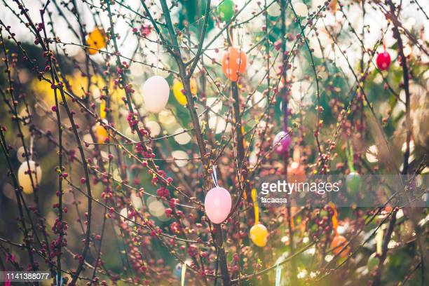 decorated branch with easter eggs - easter stock pictures, royalty-free photos & images