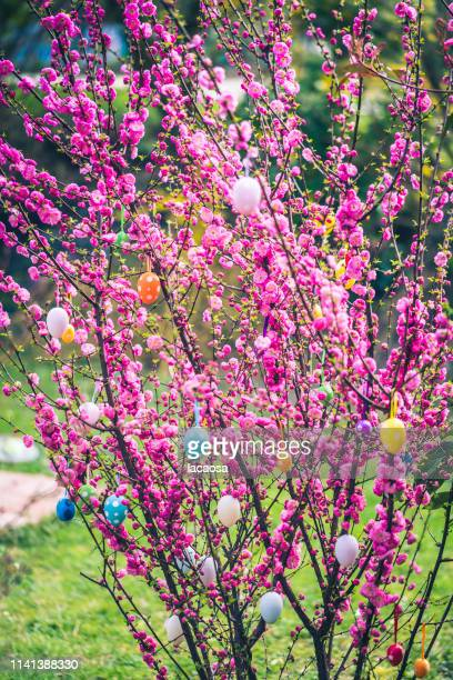 decorated branch with easter eggs - easter religious stock pictures, royalty-free photos & images