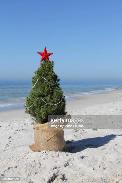 decorated christmas tree at the beach - marie lafauci stock pictures, royalty-free photos & images