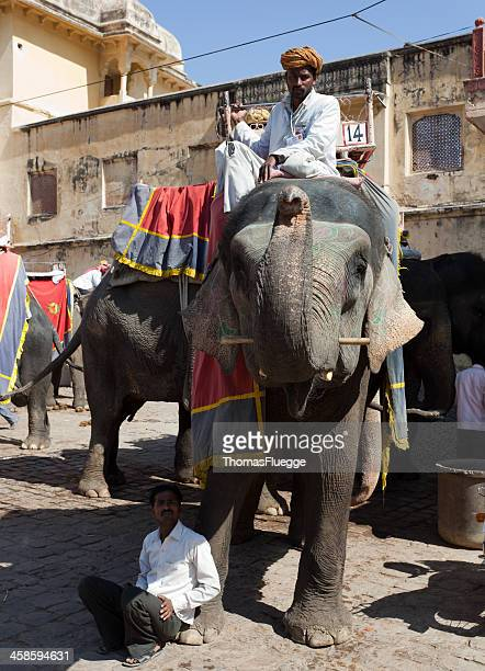 Decorated Elephant in Jaipur