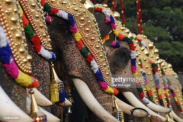 decorated elephants, pooram festival, thrissur, kerala, south india, india, asia - kerala elephants stock pictures, royalty-free photos & images