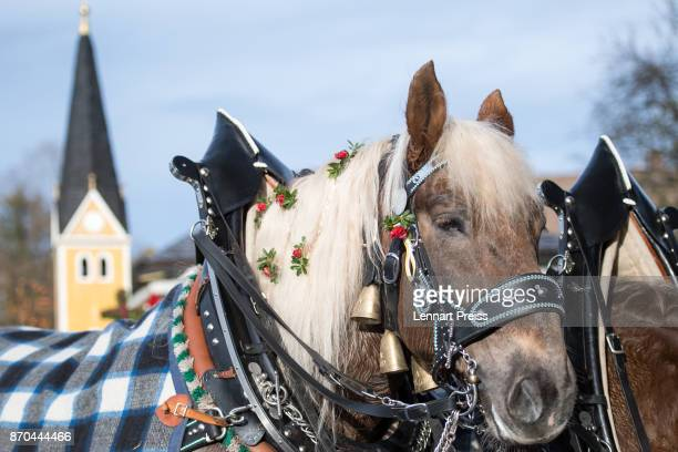 Decorated horses drawing a wagon are pictured during the annual Leonhardi procession along Schliersee lake on November 5 2017 near Miesbach Germany...