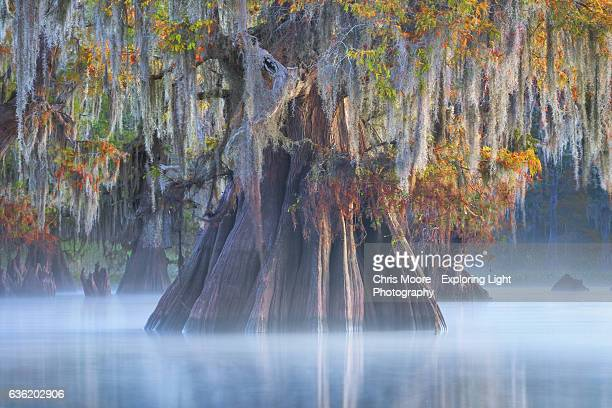 decorated - bald cypress tree stock photos and pictures