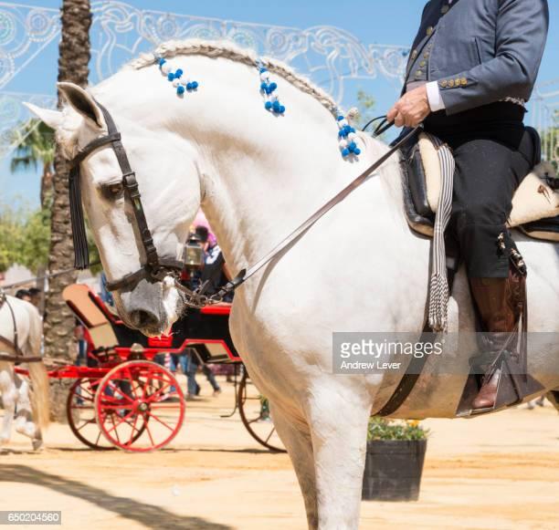 decorated spanish horse - jerez de la frontera stock pictures, royalty-free photos & images