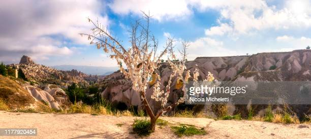 decorated tree, uchisar - turchia stock photos and pictures