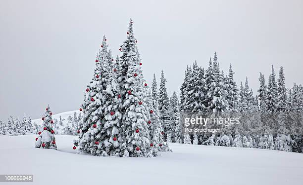 decorated trees in the christmas forest - non urban scene stock pictures, royalty-free photos & images