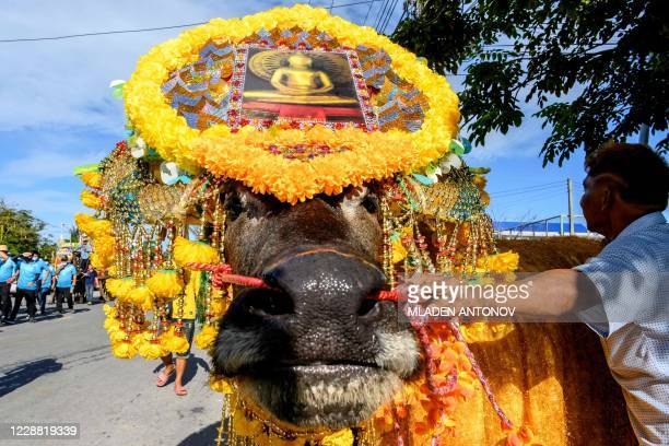 Decorated water buffalo takes part in the traditional parade before the annual Chonburi Buffalo Race in Chonburi on October 1, 2020.