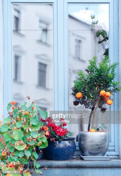 decorated window outside with plants - ornamentado fotografías e imágenes de stock