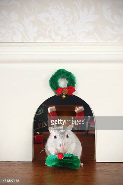 decorating the mouse hole for christmas - gerbil stock pictures, royalty-free photos & images