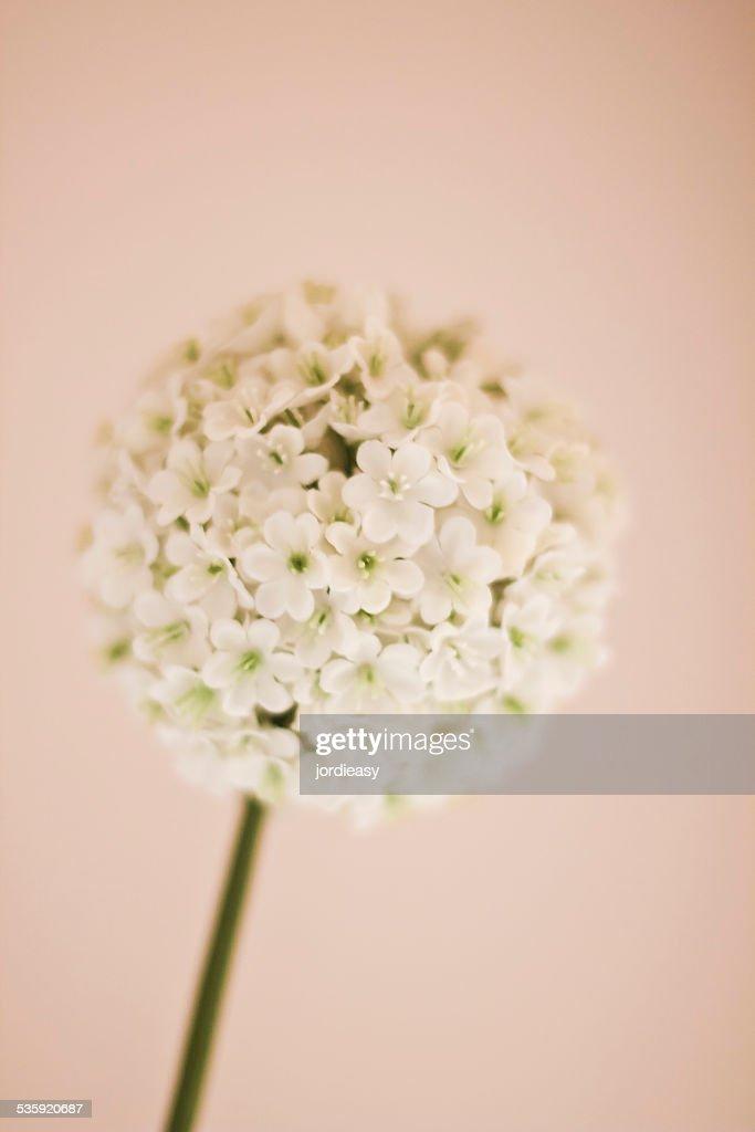 Decoration flower : Stock Photo