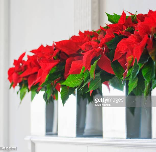 Decoration with poinsettias