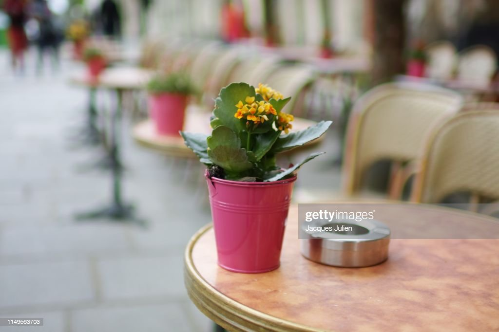 Decorative flower on table in a Parisian street cafe : Photo
