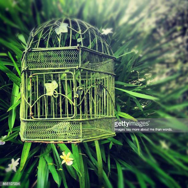 Decorative iron birdcage in the garden.
