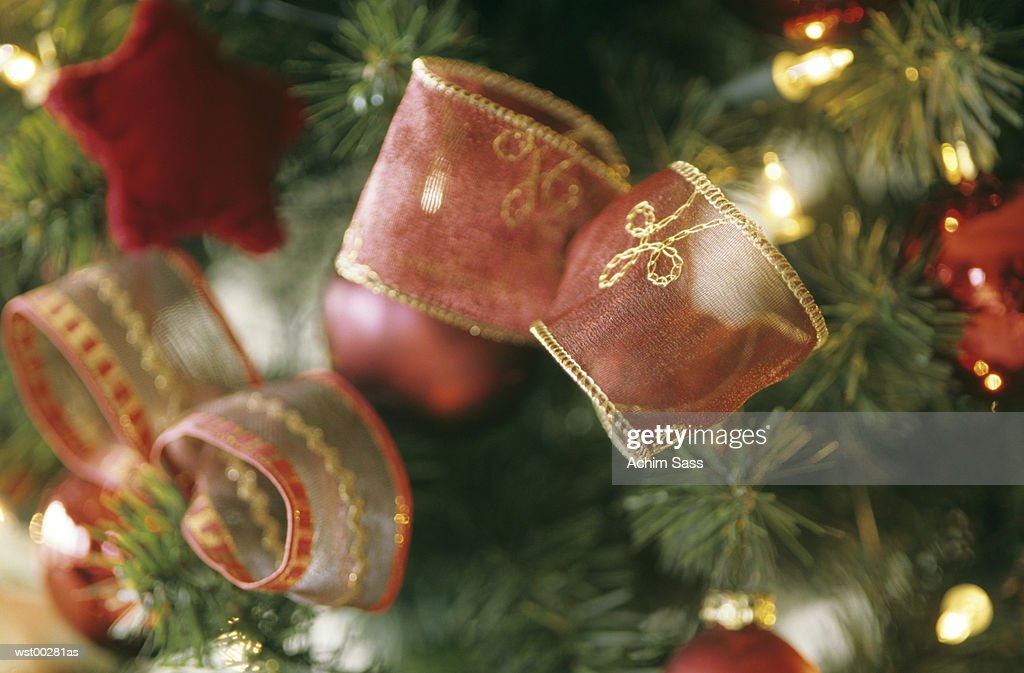 Decorative ribbon tied on Christmas tree : Stock Photo